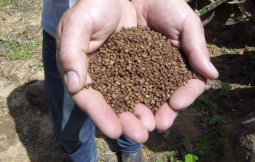hands holding granules of rainbow plant food fertilizer